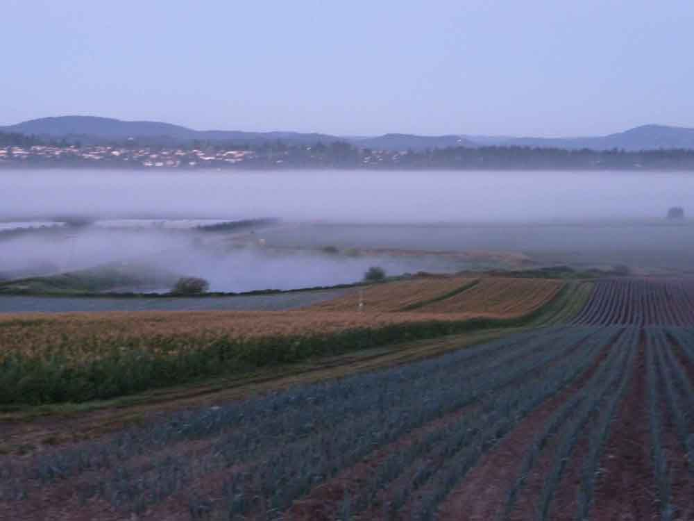 Fog over Mitchel Farms
