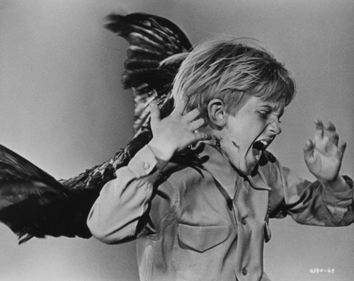 Crow attacks child