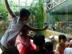 Panda Zoo