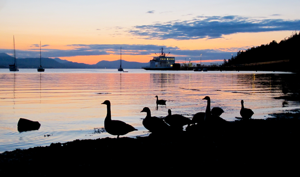sunset-geese