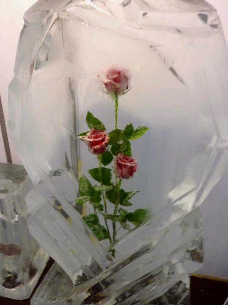 Roses Frozen in Time